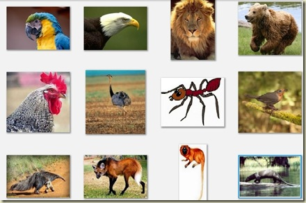 Qual destes animais representa o Brasil
