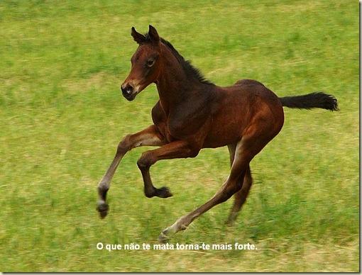 Cavalos 08