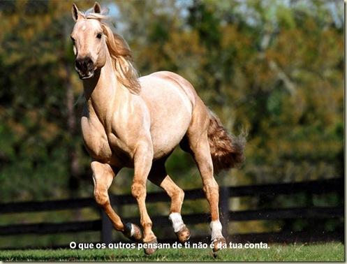 Cavalos 14