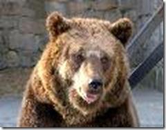 Urso de cara