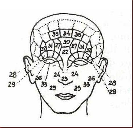 Craniologia 08