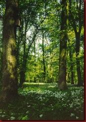 Enem Florestas
