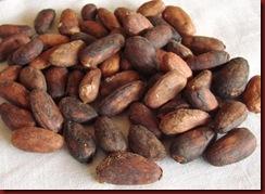 ca 38 semente de cacau