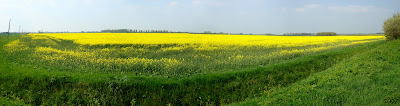 Aldreth yellow fields_Panorama1-1.jpg