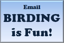 e-mail birdingisfun at gmail dot com