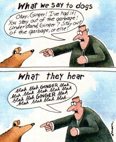 Co słyszą psy