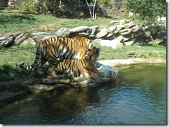 zoo 082