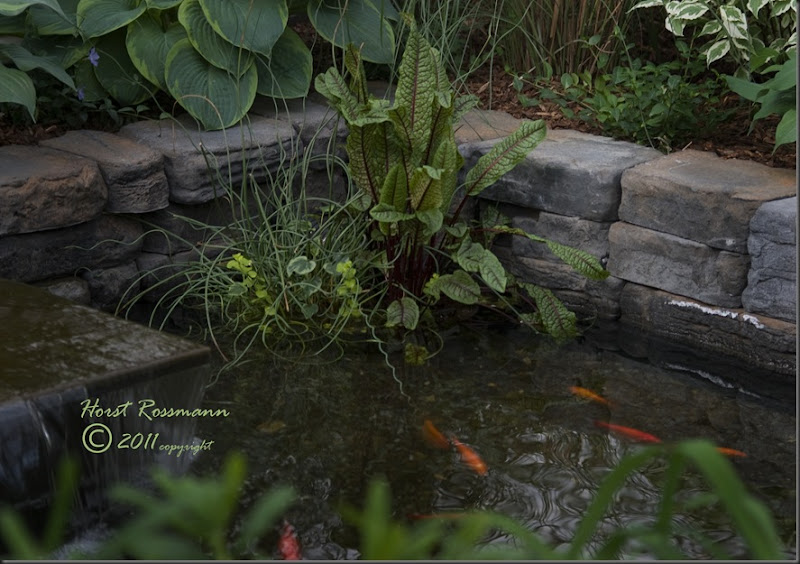 Goldfish pond copy