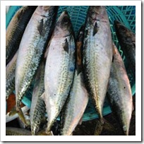 ilegal_fish_import_indonesia