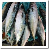 ilegal_fish_import_indonesia