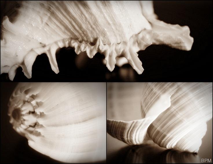 shellsmosaic1