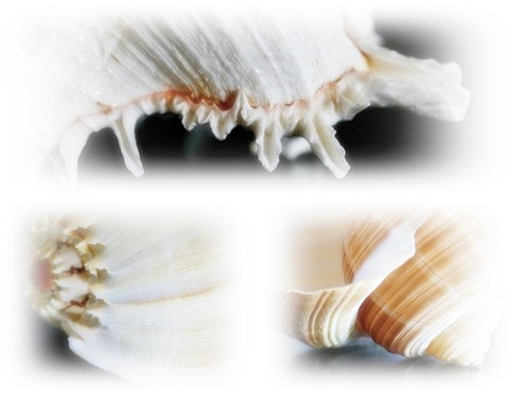 shellmosaic6
