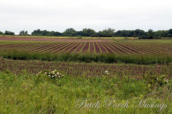 rural mo