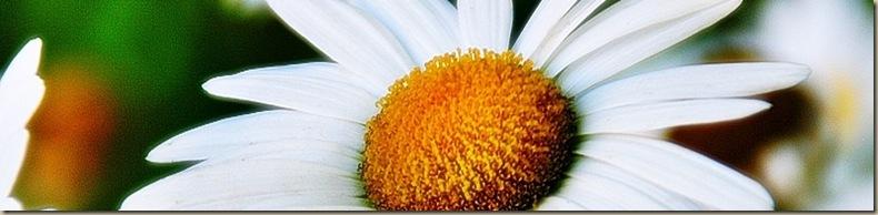 daisy10a1