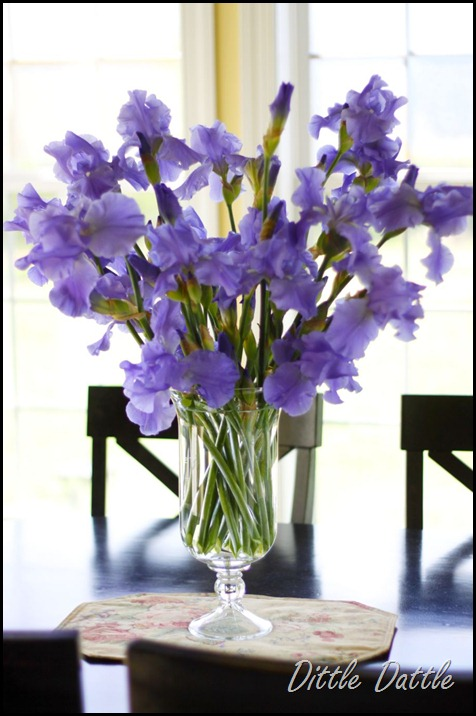 Purple Iris display