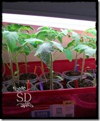 SeedlingUpdate 4-1