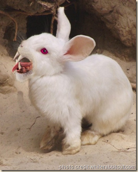 Evil rabbit - yuck!