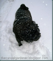 Harry In The Snow