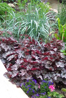 BlueOatGrass and Heuchera Combo