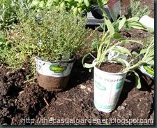 Bonnie Plants Herbs