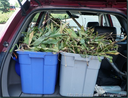 Buckets of bulbs rescued from landfill