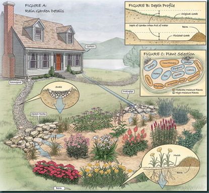 How To Build A Rain Garden A Solution For Soggy Wet