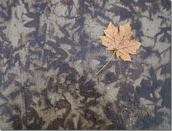 Leaf prints on the cement