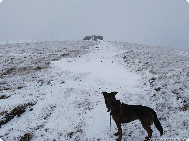 shunner fell summit