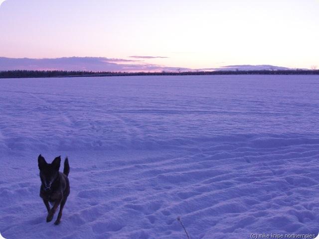 snow morningsolstice 003