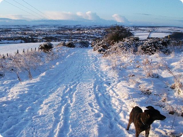 snow morningsolstice 019