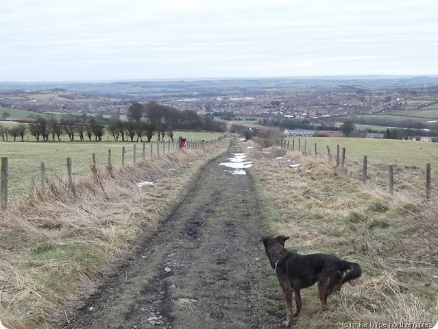 the lane to crook