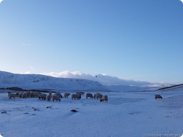 upper teesdale jan 2011