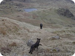 down to codale tarn