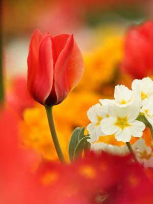 Flowers revival