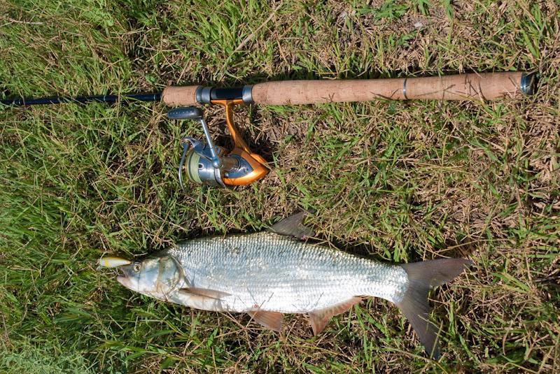лучшая рыбалка в узбекистане