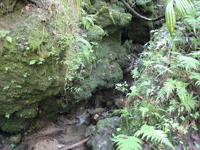 Bionic Beauty's trip to Devils Millhopper - A trickling stream, limestone rock, moss, liverworts