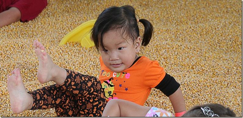 pumpkinfarm2