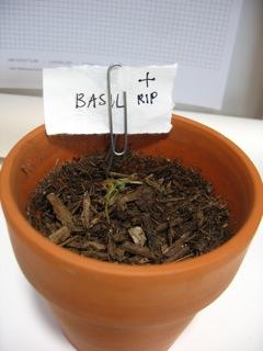 RIP Basil.jpg