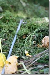 Kompost 003