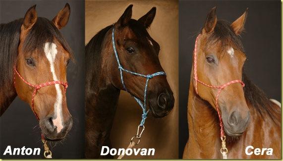 Pferdekopfe