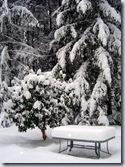 a-Rhodie_snow 2