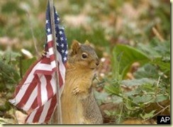 PATRIOTIC-SQUIRREL-large