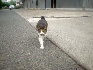 近所の子猫・まるチャン