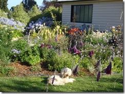Ollie in his garden