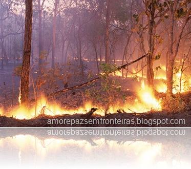 Código Florestal Ameaçado