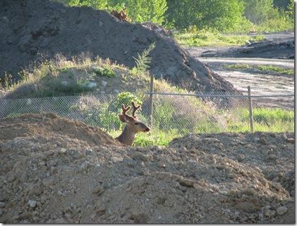 deer in park 274