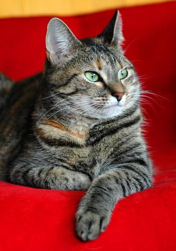 Ruby die schöne Katzendame!