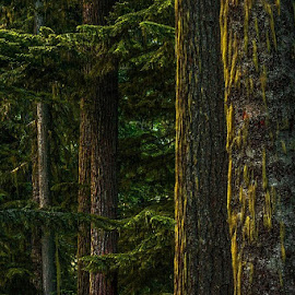 by Rob Hansen - Nature Up Close Trees & Bushes