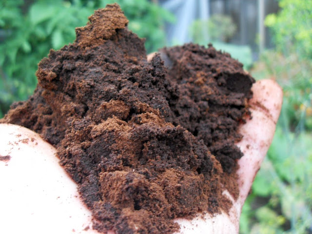 holding a pile of used coffee grounds