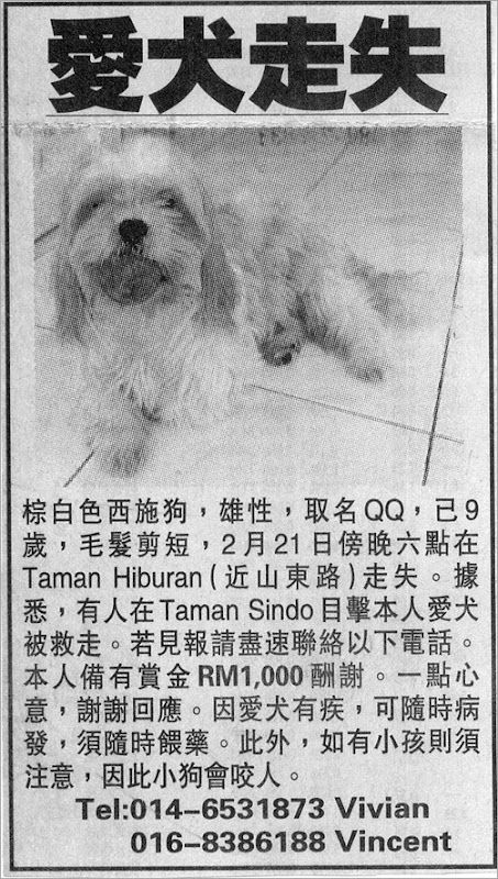 missing dog1